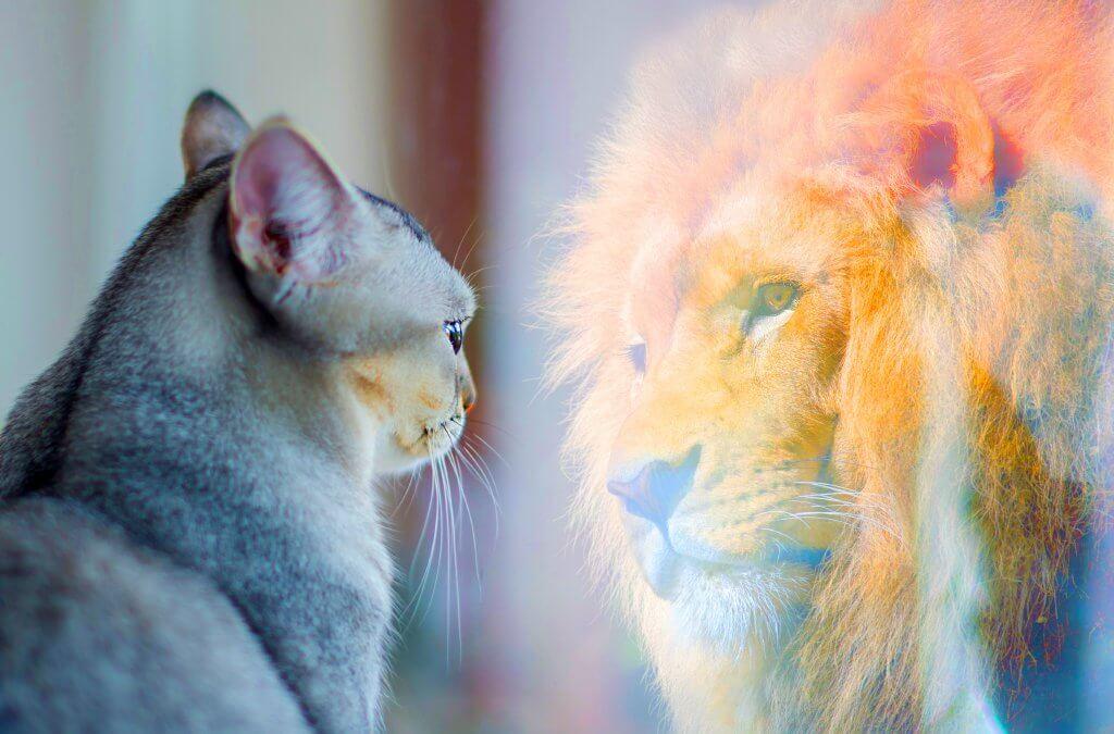 gato vendo seu reflexo ser um leão