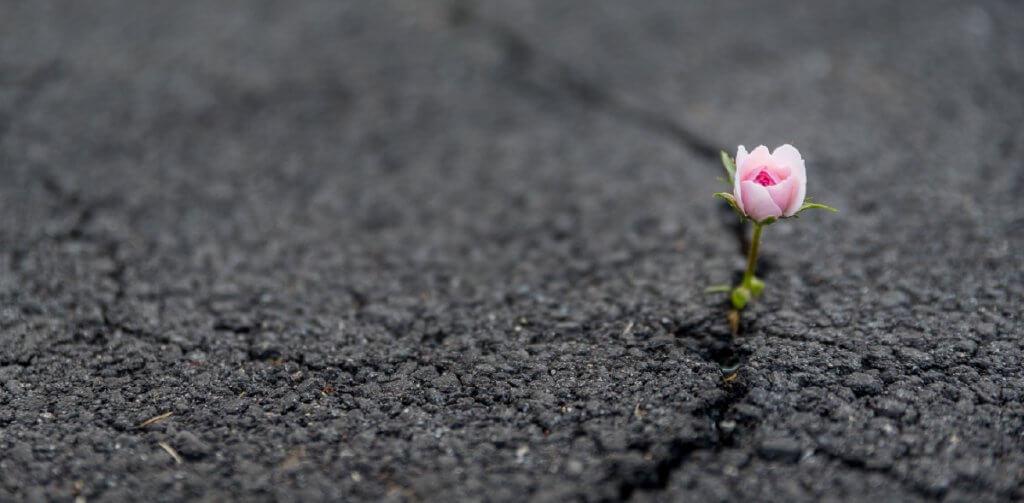 um flor nascendo entre o aslfato rachado